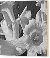 Daffodil Monochrome Study Wood Print by Chris Berry
