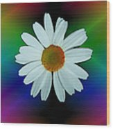 Daisy Bloom In Neon Rainbow Lights Wood Print by ImagesAsArt Photos And Graphics