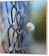 Dandelion Wish Wood Print by Laura Fasulo