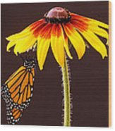 Dangling Monarch Wood Print by Jean Noren