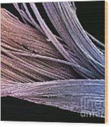 Dental Floss Sem Wood Print by Spl