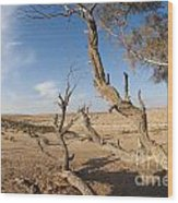Desert Tamarix Trees Wood Print by Dan Yeger