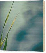 Dew Drop Wood Print by Bob Orsillo