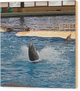 Dolphin Show - National Aquarium In Baltimore Md - 1212102 Wood Print by DC Photographer