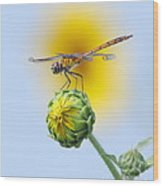 Dragonfly In Sunflowers Wood Print by Robert Frederick