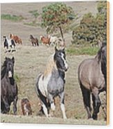 Duchess Sanctuary On The Move Wood Print by Duchess Sanctuary