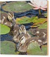 Duck Soup 2 Wood Print by Fraida Gutovich
