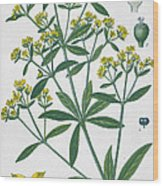Dyers Madder Wood Print by French School