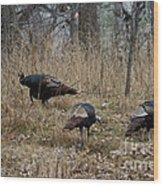 Eastern Wild Turkeys Wood Print by Linda Freshwaters Arndt