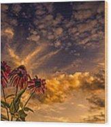 Echinacea Sunset Wood Print by Bob Orsillo