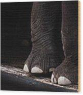 Elephant Toes Wood Print by Bob Orsillo