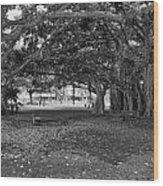 Embraced By Trees Wood Print by Douglas Barnard