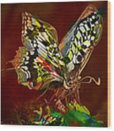 Enchanted Butterfly. First.  Wood Print by Tautvydas Davainis
