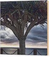 Encinitas Sunset Wood Print by Carol Leigh