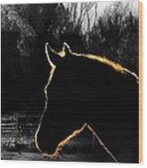 Equine Glow Wood Print by Steven Milner