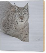Eurasian Lynx Wood Print by Andy Astbury