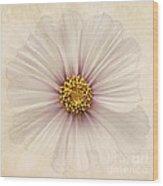 Evanescent Wood Print by John Edwards