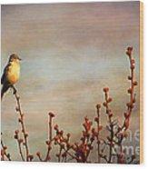 Evening Mocking Bird Wood Print by Darren Fisher