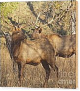 Evening Sets On The Elk Wood Print by Robert Frederick