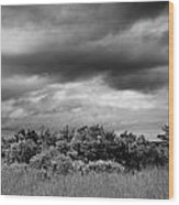 Everglades Storm Bw Wood Print by Rudy Umans