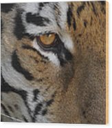 Eye Of The Tiger Wood Print by Ernie Echols