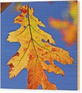 Fall Oak Leaf Wood Print by Elena Elisseeva