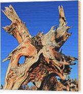 Fallen Wood Print by Shane Bechler