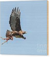 Female Red-tailed Hawk In Flight Wood Print by Carl Jackson
