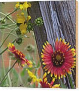 Fenceline Wildflowers Wood Print by Robert Frederick