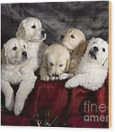 Festive Puppies Wood Print by Angel  Tarantella