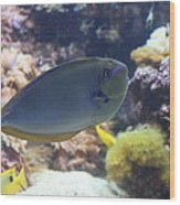 Fish - National Aquarium In Baltimore Md - 1212121 Wood Print by DC Photographer