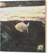 Fish - National Aquarium In Baltimore Md - 121249 Wood Print by DC Photographer
