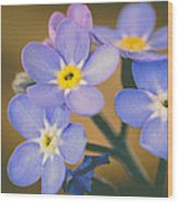Forget Me Nots Wood Print by Marco Oliveira