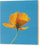 Flower - Growing Up In Brooklyn Wood Print by Mike Savad