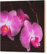 Flower - Orchid - Better In A Set Wood Print by Mike Savad