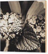 Flowers In A Jar Wood Print by Marco Oliveira