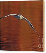 Flying Gull On Fall Color Wood Print by Robert Frederick