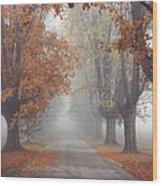 Foggy Driveway Wood Print by Wendell Thompson