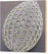 Foraminiferan, Sem Wood Print by Power And Syred