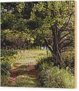 Forgotten Road Wood Print by Tam Graff