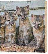 Four Fox Kits Wood Print by Paul Freidlund