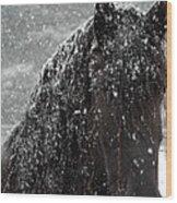 Friesian Snow Wood Print by Fran J Scott
