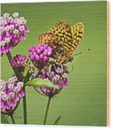 Fritillary Butterfly Square Format Wood Print by Christina Rollo