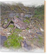 Frog Eating A Worm Wood Print by Susan Leggett