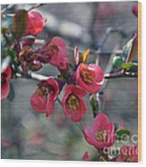 From Quince I Came Wood Print by Brenda Dorman