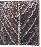 Frozen Leaf Wood Print by Anne Gilbert