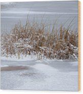 Frozen Reeds Wood Print by Julie Palencia