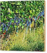 Fruit Of The Vine Wood Print by Kay Gilley