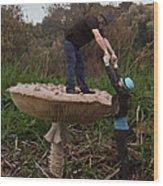Fungi Heads Wood Print by Eric Kempson