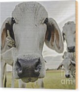 Funny Cows Wood Print by Cindy Bryant